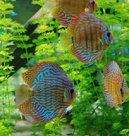 2018 Aquarium porte dorée TLM
