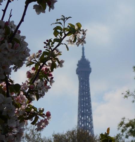 2020 03 26 Arbre fleurs tour eiffel TLM