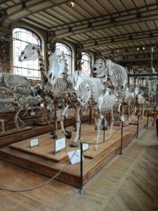 TLM 2018 Paléontologie Zebre
