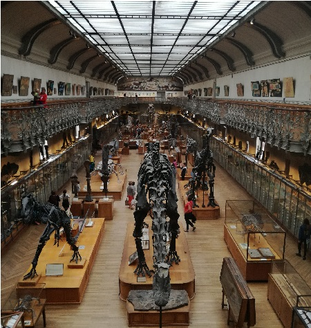 TLM 2018 Galerie Paléontologie
