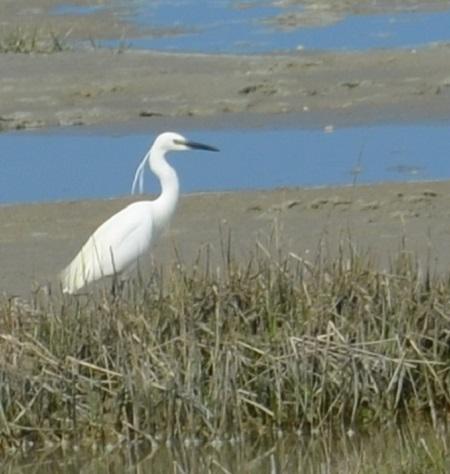 oiseau grue blanche AB TLM