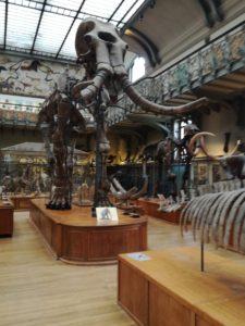 TLM 2018 Paléontologie mammouth